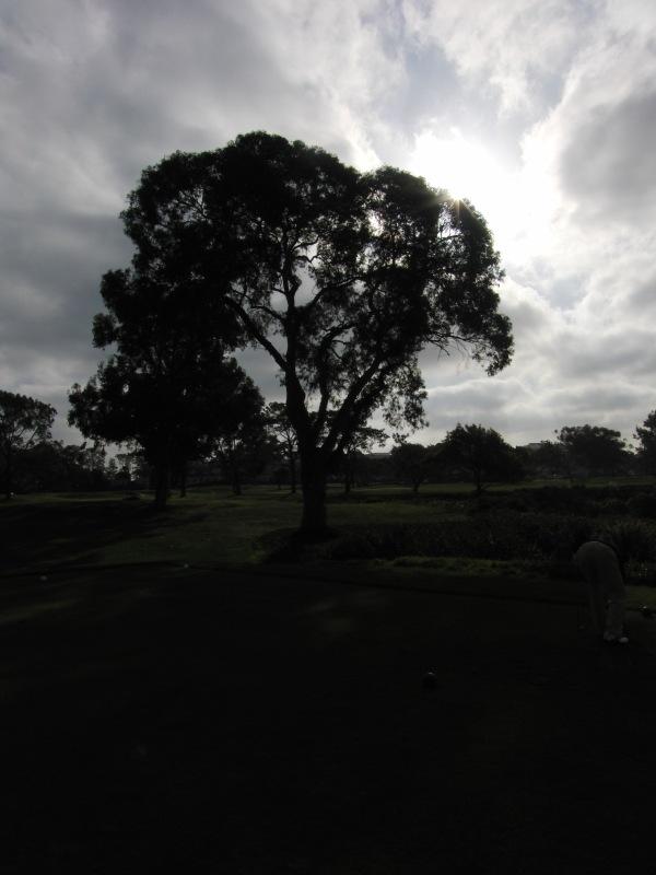 Torrey Pines 014